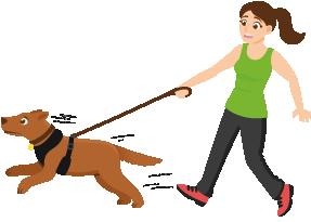 Hund zieht an der Leine und eine Frau versucht ihn zu halten
