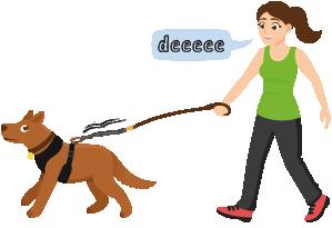 Frau trainiert mit ihrem Hund und der elastischen traindee Leine
